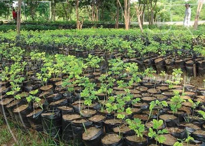 San Rafael del Sur sede del lanzamiento nacional de 34 parques ecológicos - TN8 Nicaragua
