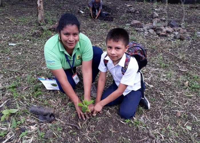 """Lanzan campaña """"un madroño para mi purísima"""" en Jinotega - TN8 Nicaragua"""