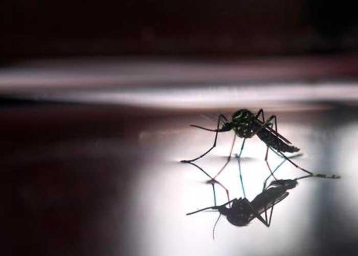 Resultado de imagen de Asciende a 20 el número de muertes por dengue en Paraguay