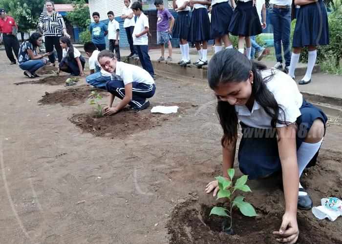 """Campaña de reforestación en Nicaragua """"Un Madroño para mi Purísima"""" - TN8 Nicaragua"""