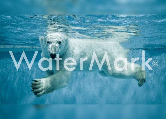 Google te dice c mo quitar la marca de agua de una fotograf a - Quitar cal del agua ...