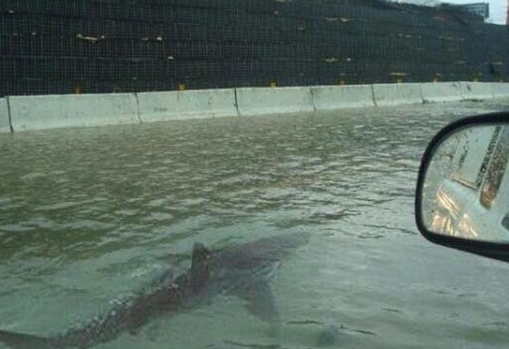 VIRAL: Tras Harvey, ¡pesca en su casa inundada!