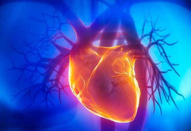 Es posible regenerar el corazón humano? Al parecer sí