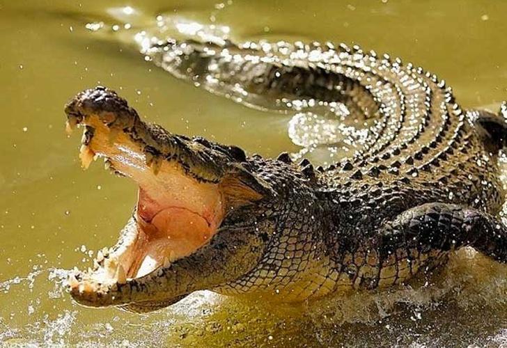 Violó la cuarentena y se lo devoró un cocodrilo — Coronavirus en África