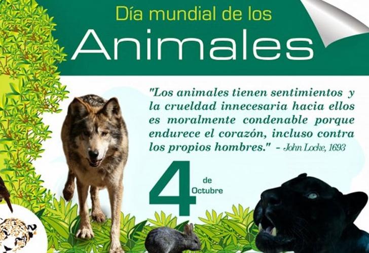 Hoy 4 De Octubre Es El Dia Mundial De Los Animales