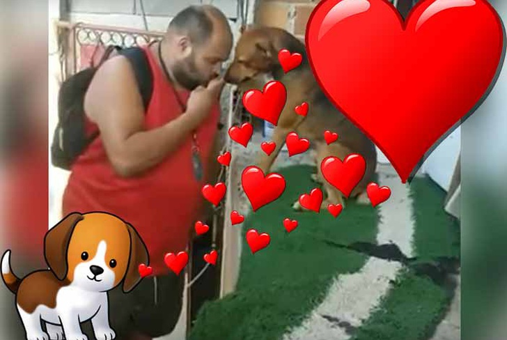 video viral, perrito, amor, amigo fiel, youtube,