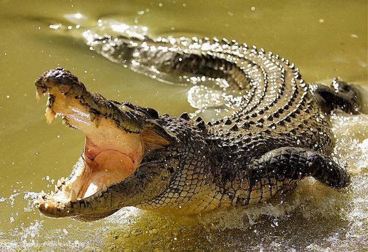Pastor es devorado por cocodrilos