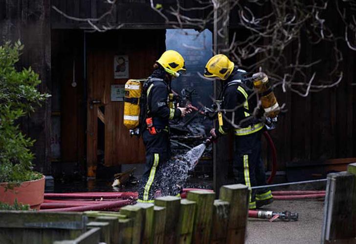 Muere un cerdo hormiguero en un incendio en el zoo de Londres