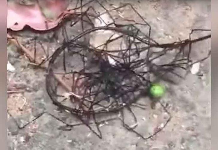 Un extraño y espeluznante animal se arrastra entre unas rocas en Taiwán