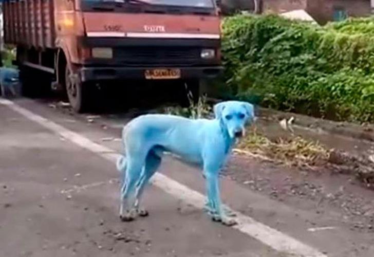 Extraño fenómeno afecta a los perros callejeros en Bombay