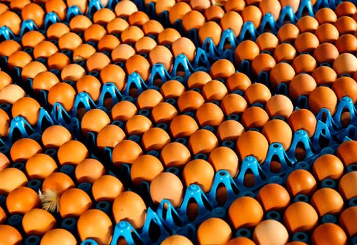 Alerta alimentario por 20.000 unidades de huevo líquido contaminado con fipronil