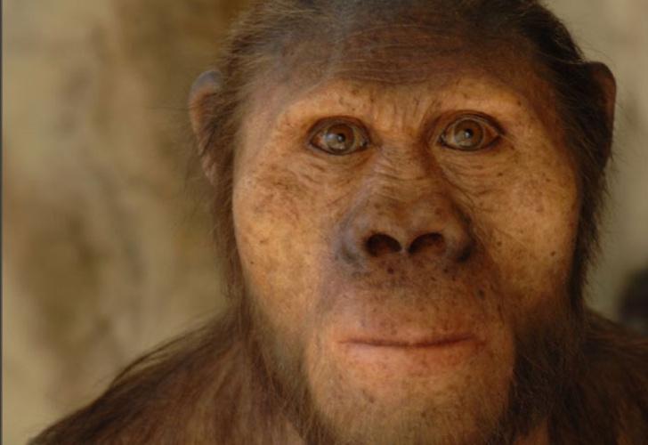 El Homo erectus se extinguió por 'perezoso'