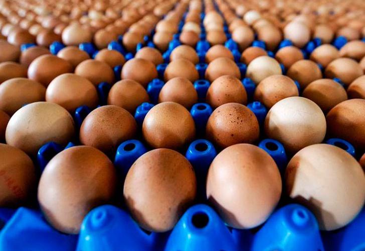 Retiran del mercado más de 200 millones de huevos en EU