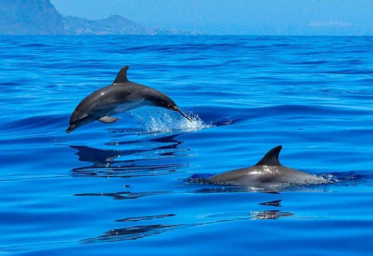Descubren nueva especie de cocodrilo con aleta de delfín