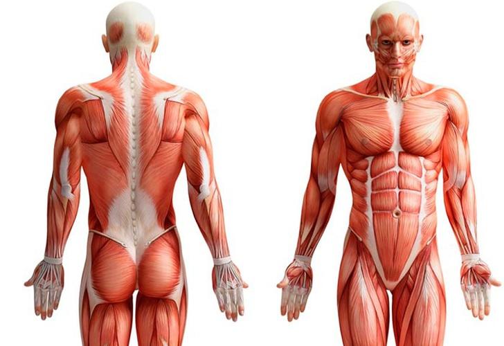 Insólito: Conocé el nuevo órgano encontrado en el cuerpo humano