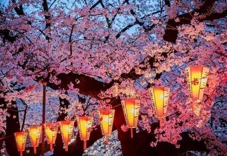 Japón Se Viste De Rosa Con Los Cerezos En Flor