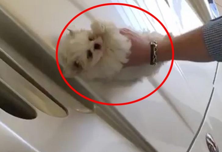 Perrito malt s es utilizado como trapo para limpiar un - Trapos para limpiar ...