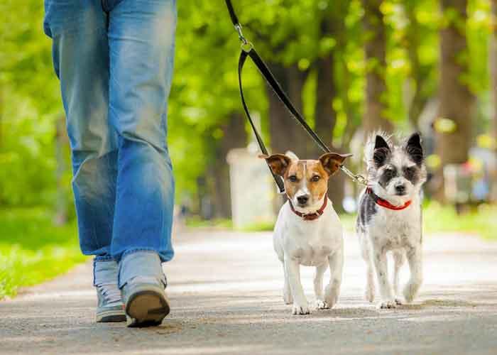 Alemanes pasearán a sus perros 2 veces al día