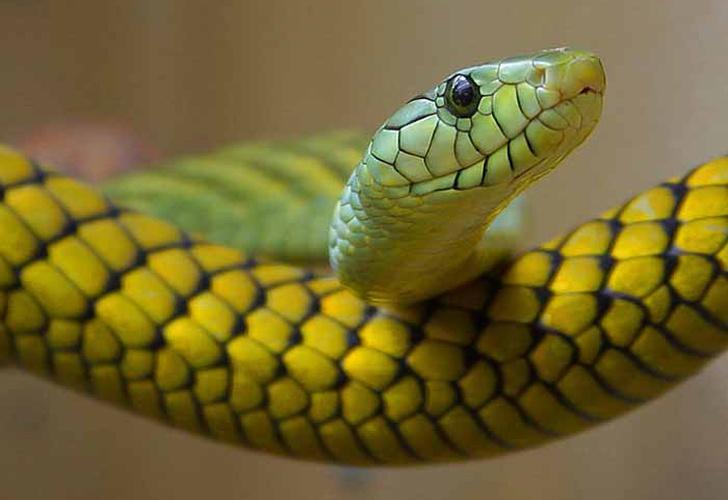 Una serpiente tragándose a sí misma desconcierta en las redes sociales