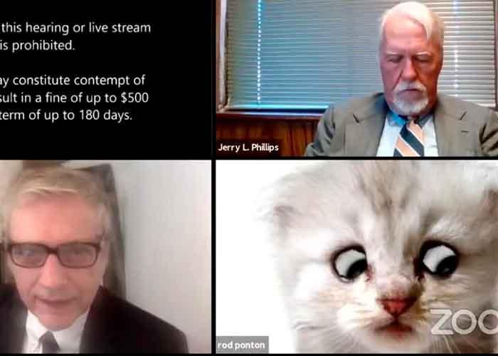Resultado de imagen para juez con fliltro de gato