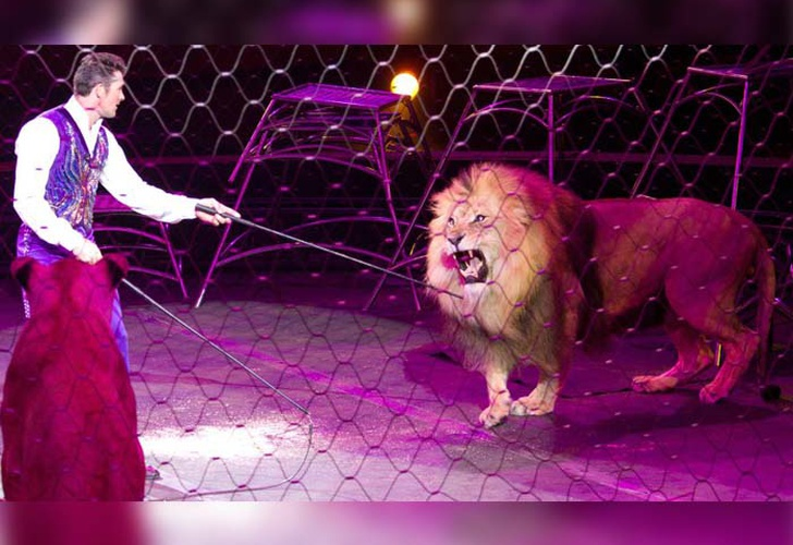 Lion attacks tamer and spectators fleeing in terror - TN8 the channel young of Nicaragua 1