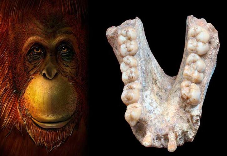 Moléculas de hace 2 millones de años aportan más datos de la evolución humana