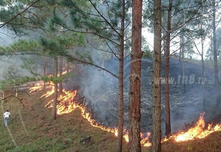 Suman 18 incendios forestales en Sinaloa