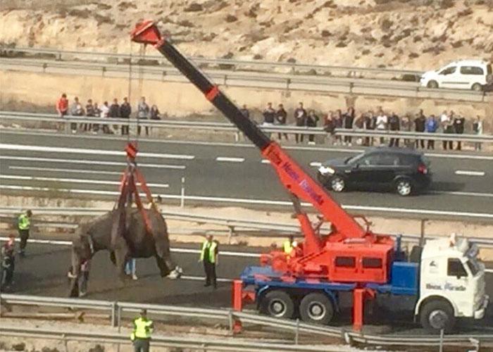 España: Volcó un camión que trasladaba a cinco elefantes