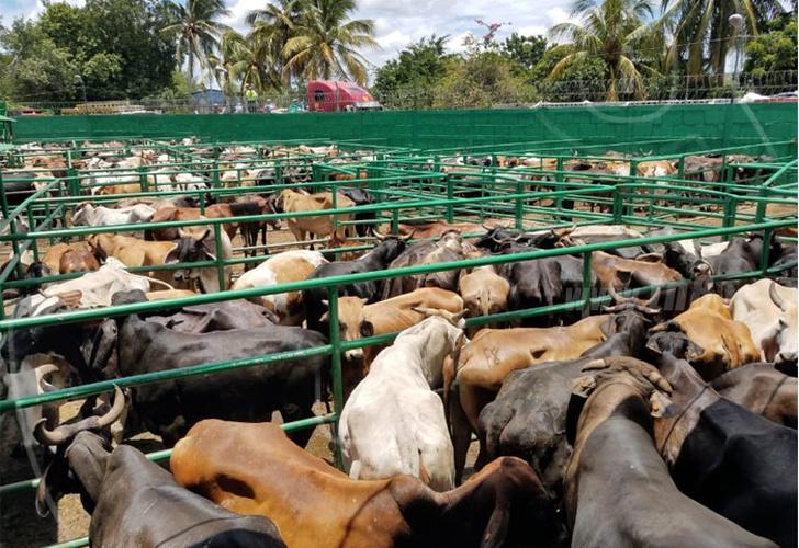 nicaragua, informe pecuario, exportacion, produccion, crecimiento,