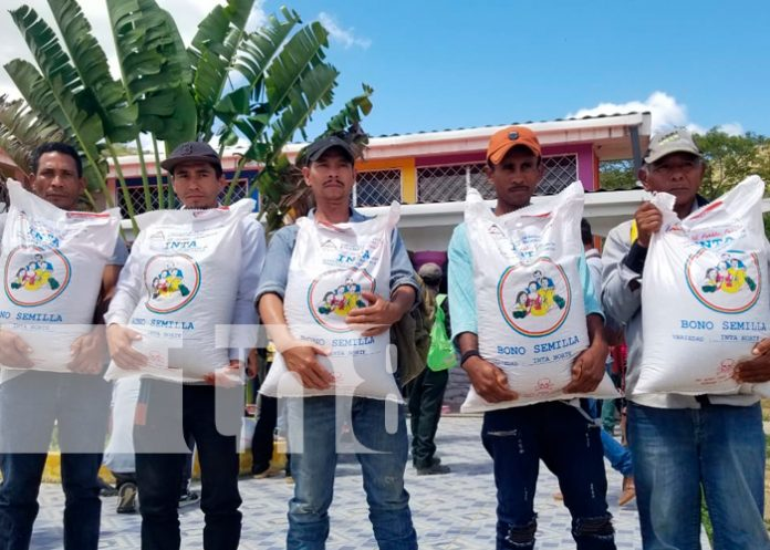 nicaragua, inta, macuelizo, entrega de bono, siembra de frijol, economia, productores,