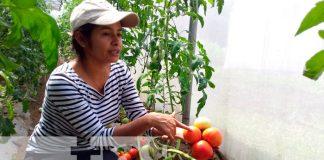 nicaragua, managua, produccion, hortalizas,