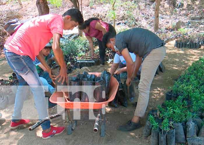 nicaragua, managua, jóvenes, plantas, tierra,