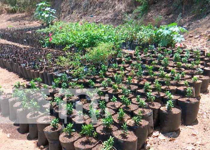 nicaragua, managua, jóvenes, plantas,