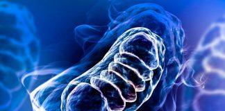 proteina mitocondrial