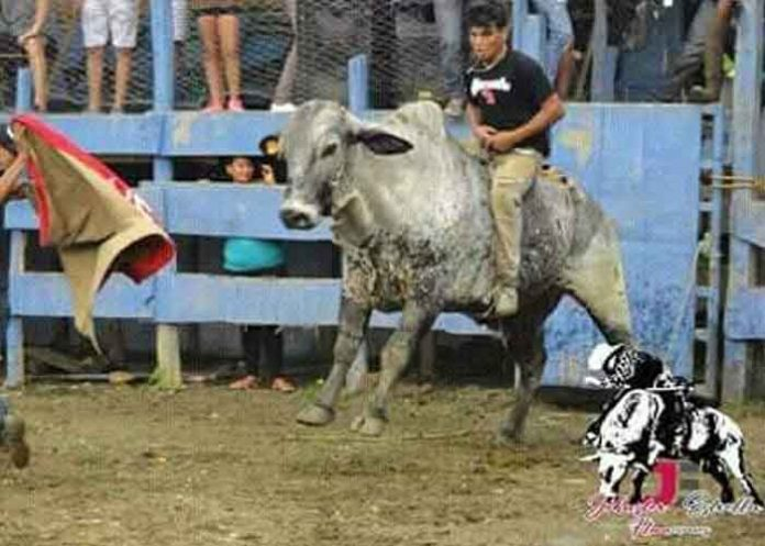 nicaragua, rivas, toro, accidente,