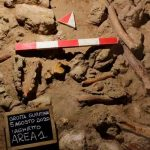ciencia, descubrimiento, italia, nueve neandertales, caracteristicas