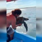 nicaragua, san juan del sur, tortuga, rivas,