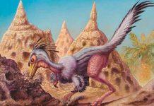 ciencia, dinosaurio, depredador, Shuvuuia deserti,
