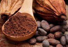 nicaragua, cacao, produccion nacional, exportaciones, crecimiento