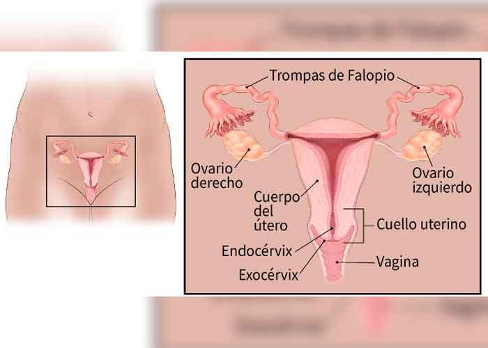 salud, cancer de ovarios, sintomas, causas, enfermedad