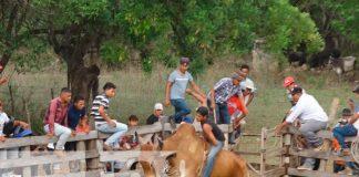 nicaragua, nandaime, corridas de toro, virgen de fatima,