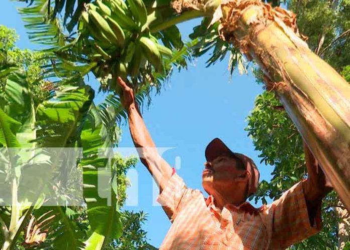 nicaragua, el crucero, siembra, campesinos, granos basicos,