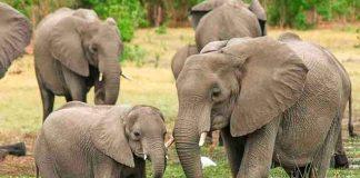 india, rayo, tormenta electrica, muerte, elefantes,