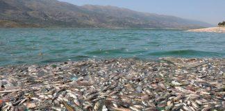 libano, peces muertos, aparicion, lago artificial, autoridades, desastre ecologico,