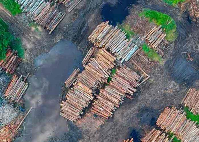 amazonia brasileña, medio ambiente, deforestacion, cambio climatico,