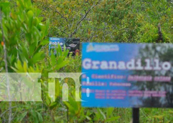 nicaragua, bilwi, bicu, universidad, arboretum,