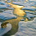 artico, calentamiento, cambio climatico, estudio,