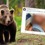estados unidos, alaska, ataque de oso, animales,