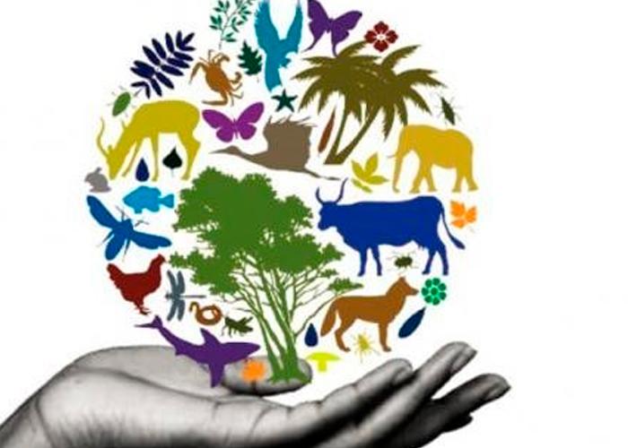 naturaleza, Diversidad Biológica, recursos naturales,día mundial,