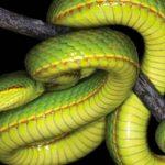 ciencia, serpiente, bacterias, excremento,
